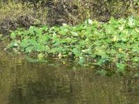 水生植物.jpg