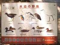 野鳥看板.jpg